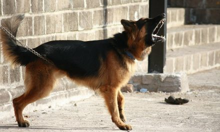 How to Stop a Dog Barking with an E Collar