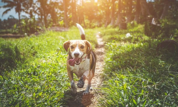 """What Is """"Static"""" Stimulation From Dog Collars?"""