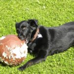 What Causes A Dog To Chew & How To Train Them To Stop with an e-collar