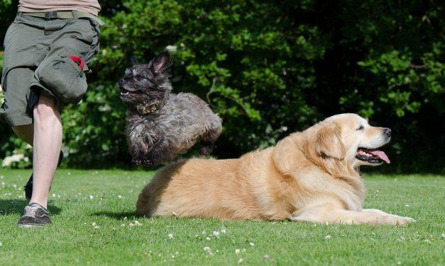 Fun & Easy Tricks To Teach Your Dog