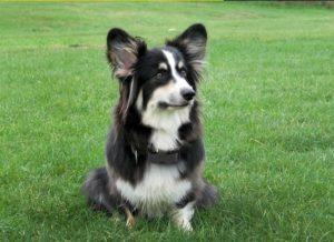 A dog wearing an e collar
