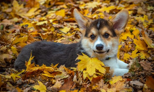 Fall Safety Tips For Your Dog