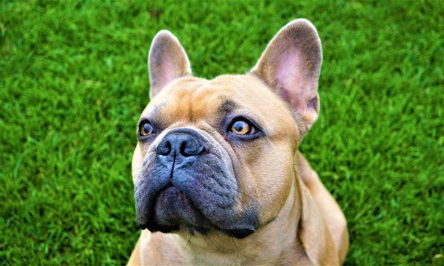 Underground Dog Fence Installation Guide