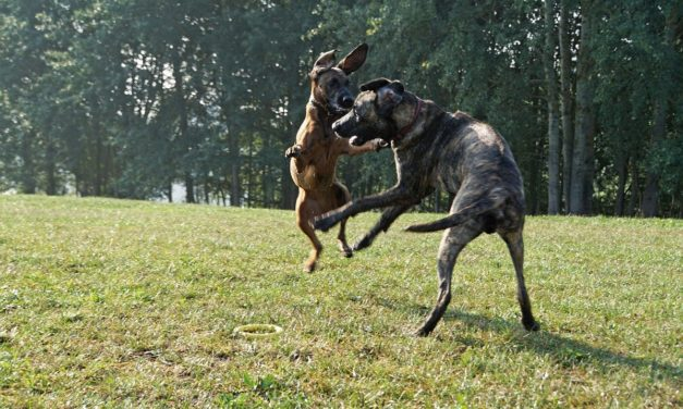 Why Dogs Jump Up On People & How To Train Them To Stop With an E Collar