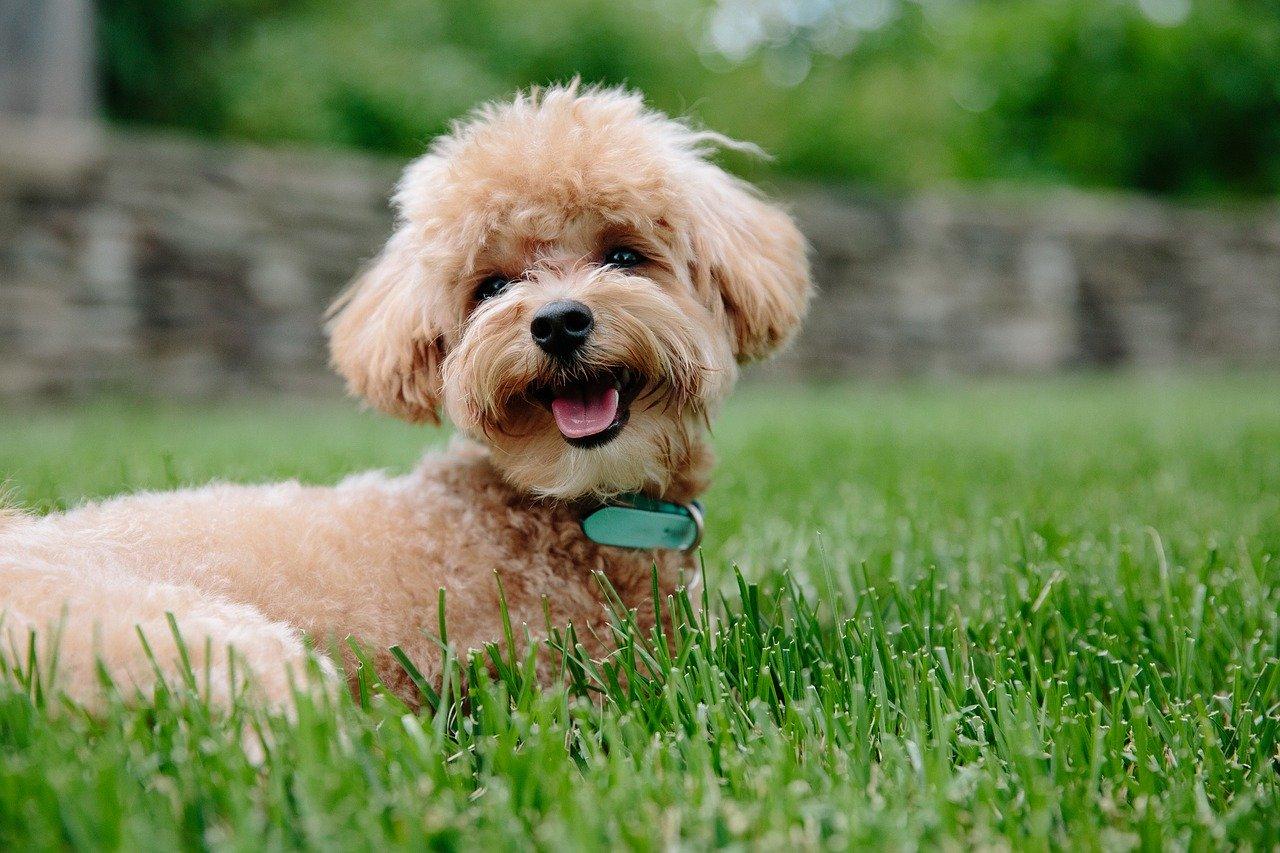 A puppy sat in the garden