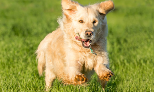 Why Dogs Like To Chase Things (like cars & cats) & How To Train Them To Stop with an e collar