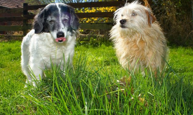 Choosing Between Long And Short Probes For Short & Long Haired Dogs
