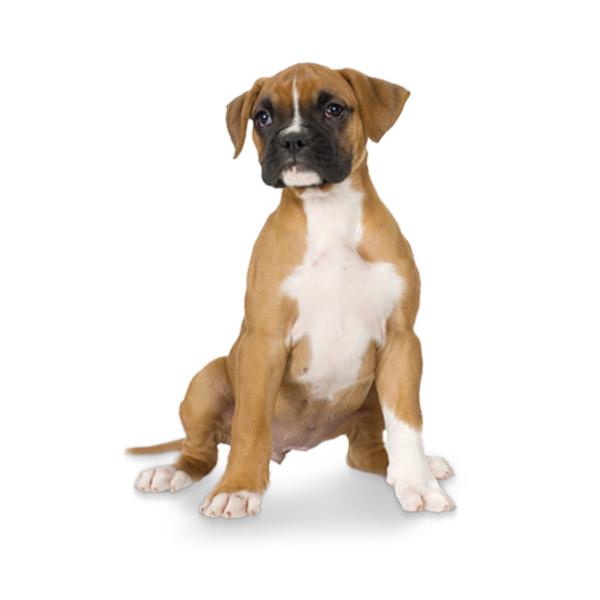 Medium Dog